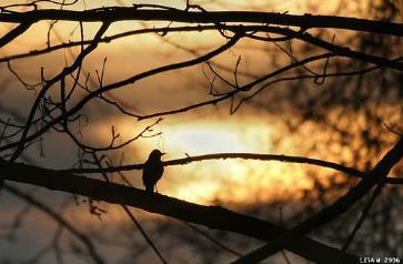 sparrow-363x238