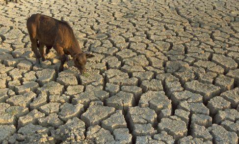 jwj-Drought-07076_997024a