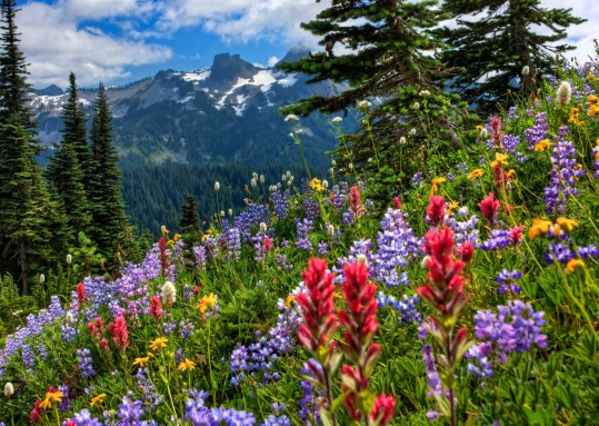 6796997-gorgeous-wildflowers