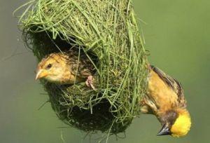 birdnest